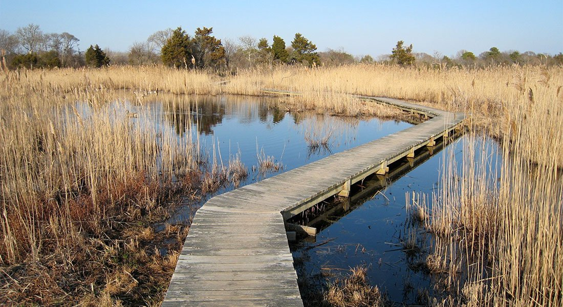 Wooden footbridge over wetlands on a sunny day.